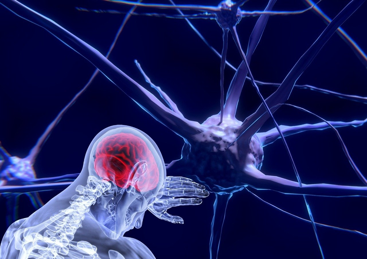 Neuronal networks decide how we perceive information